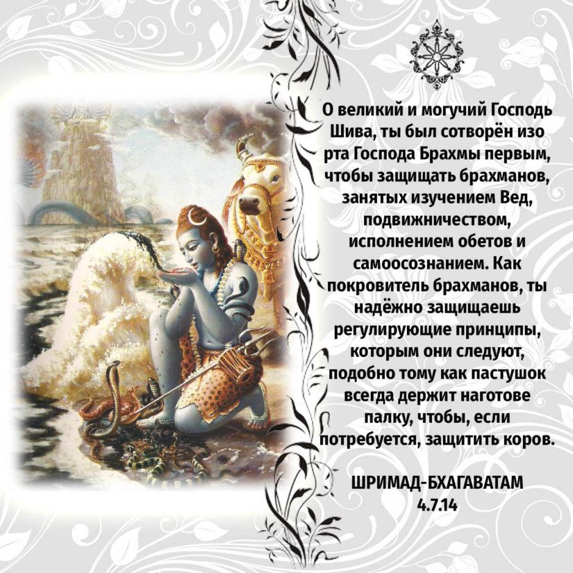 О великий и могучий Господь Шива, ты был сотворён изо рта Господа Брахмы первым, чтобы защищать брахманов, занятых изучением Вед, подвижничеством, исполнением обетов и самоосознанием. Как покровитель брахманов, ты надёжно защищаешь регулирующие принципы, которым они следуют, подобно тому как пастушок всегда держит наготове палку, чтобы, если потребуется, защитить коров.