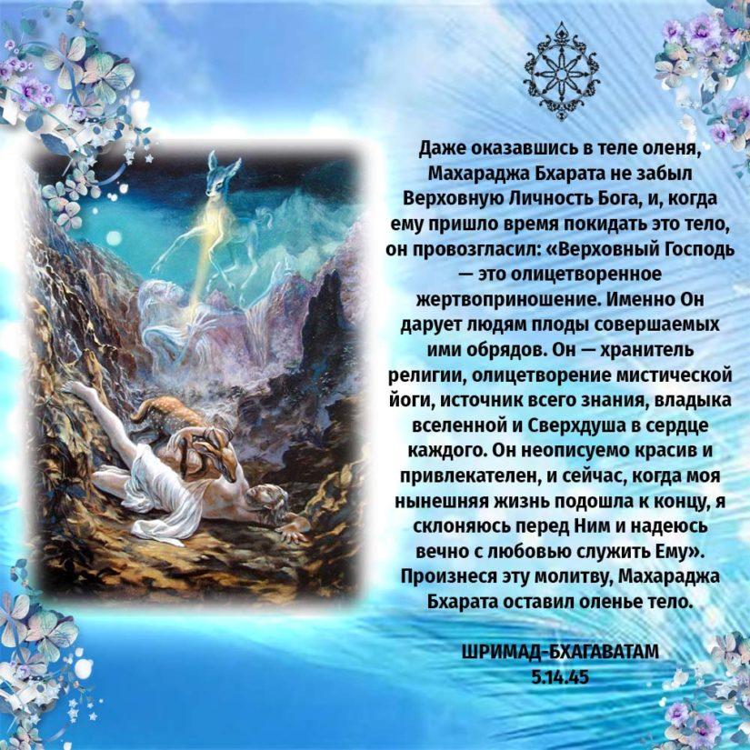 Даже оказавшись в теле оленя, Махараджа Бхарата не забыл Верховную Личность Бога, и, когда ему пришло время покидать это тело, он провозгласил: «Верховный Господь — это олицетворенное жертвоприношение. Именно Он дарует людям плоды совершаемых ими обрядов. Он — хранитель религии, олицетворение мистической йоги, источник всего знания, владыка вселенной и Сверхдуша в сердце каждого. Он неописуемо красив и привлекателен, и сейчас, когда моя нынешняя жизнь подошла к концу, я склоняюсь перед Ним и надеюсь вечно с любовью служить Ему». Произнеся эту молитву, Махараджа Бхарата оставил оленье тело.
