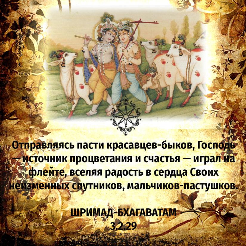 Отправляясь пасти красавцев-быков, Господь — источник процветания и счастья — играл на флейте, вселяя радость в сердца Своих неизменных спутников, мальчиков-пастушков.