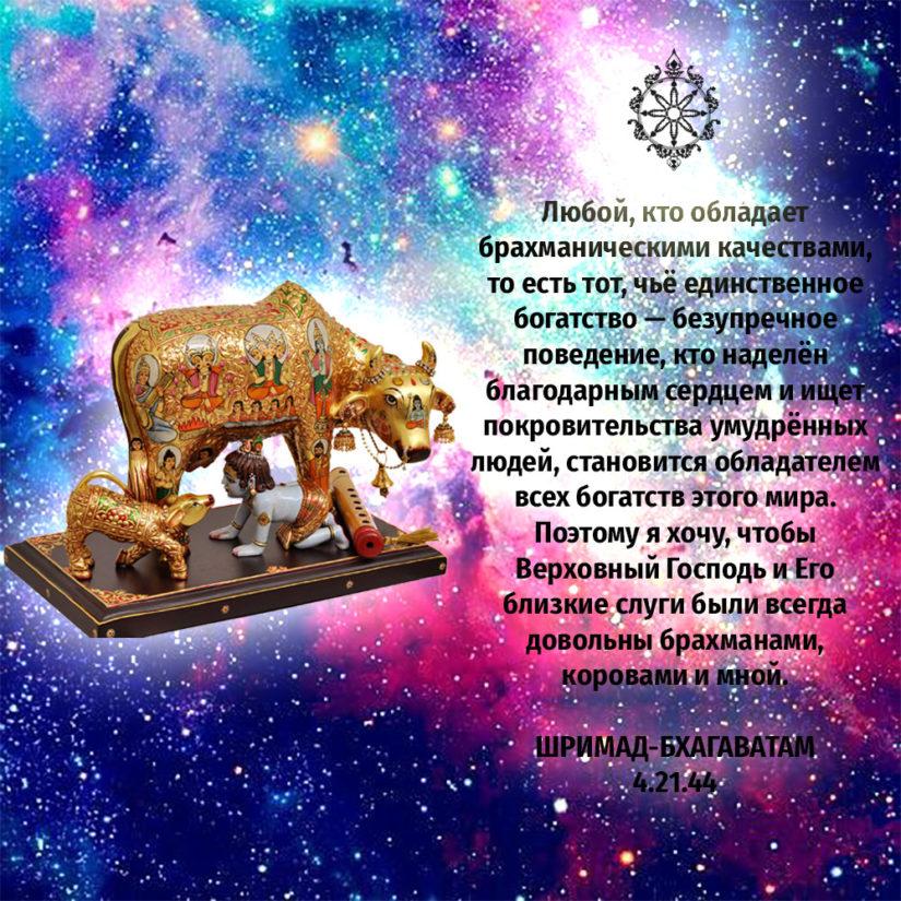 Любой, кто обладает брахманическими качествами, то есть тот, чьё единственное богатство — безупречное поведение, кто наделён благодарным сердцем и ищет покровительства умудрённых людей, становится обладателем всех богатств этого мира. Поэтому я хочу, чтобы Верховный Господь и Его близкие слуги были всегда довольны брахманами, коровами и мной.