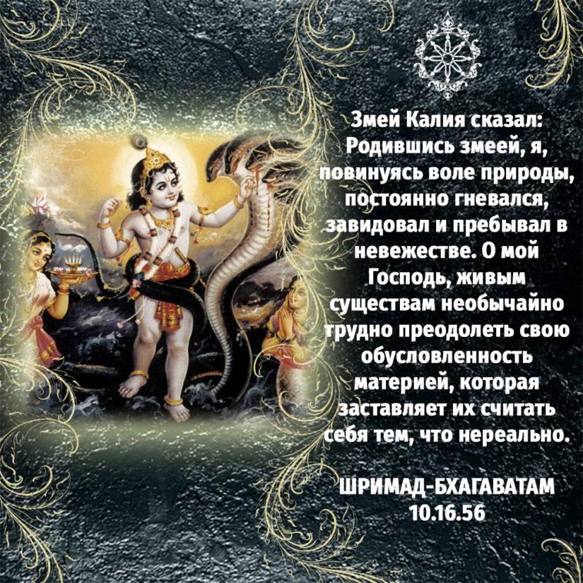 Змей Калия сказал: Родившись змеей, я, повинуясь воле природы, постоянно гневался, завидовал и пребывал в невежестве. О мой Господь, живым существам необычайно трудно преодолеть свою обусловленность материей, которая заставляет их считать себя тем, что нереально.