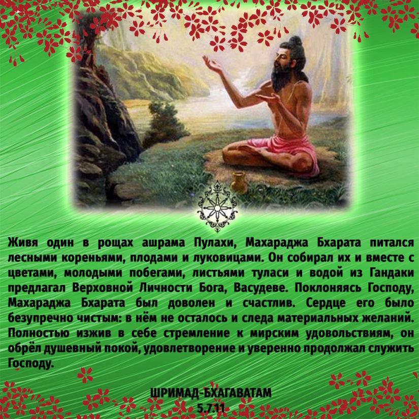 Живя один в рощах ашрама Пулахи, Махараджа Бхарата питался лесными кореньями, плодами и луковицами. Он собирал их и вместе с цветами, молодыми побегами, листьями туласи и водой из Гандаки предлагал Верховной Личности Бога, Васудеве. Поклоняясь Господу, Махараджа Бхарата был доволен и счастлив. Сердце его было безупречно чистым: в нём не осталось и следа материальных желаний. Полностью изжив в себе стремление к мирским удовольствиям, он обрёл душевный покой, удовлетворение и уверенно продолжал служить Господу.